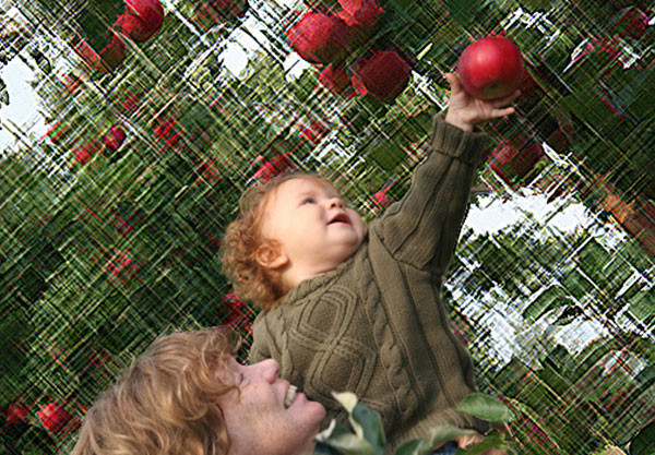 Apple picking in Quebec