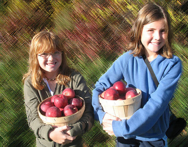 Orchards for apple picking
